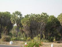 Hoka Trees Diu - Diu Hotels
