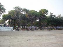 Nagoa Beach Hoka Trees - Diu Tourism